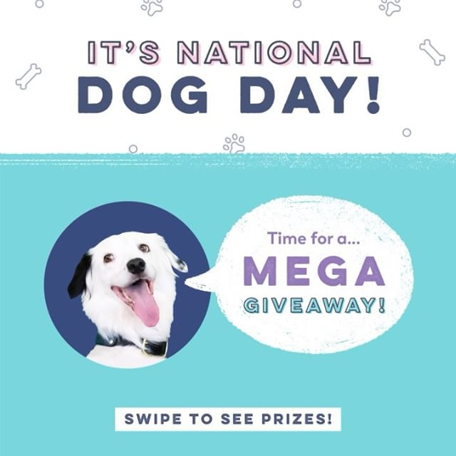 It's #nationaldogday so it's time for a… 🎉 G I V E A W A Y 🐶 - Swipe through to see the awesome prizes! 4 lucky winners will be picked. Only US entries will be selected for the bag and keychain! Worldwide entries will be considered for the GIF sticker and lesson pack! - •••FOLLOW THESE STEPS••• 1. Give us a follow 2. Like this post 3. Tell us your favorite thing about your dog in the comments - •••AND THAT'S IT••• • Giveaway closes at 4PM PST Tues (8/28) • Winners and their prize will be picked at random - Good luck, everyone!!! 🐶🎓