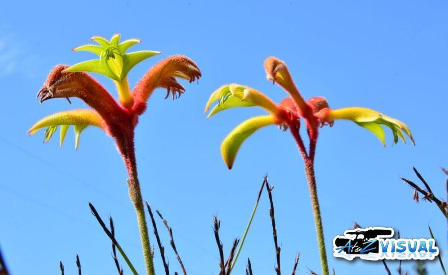 Wildflower3.jpg