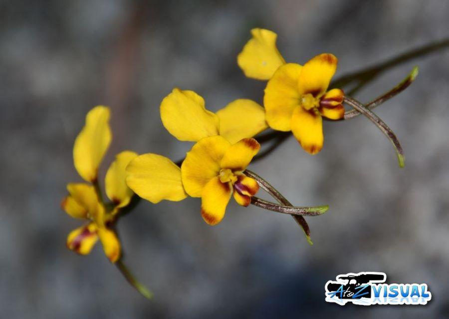 Wildflower6.jpg