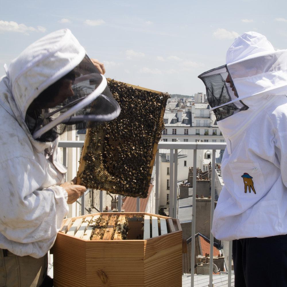 abeille1.jpg