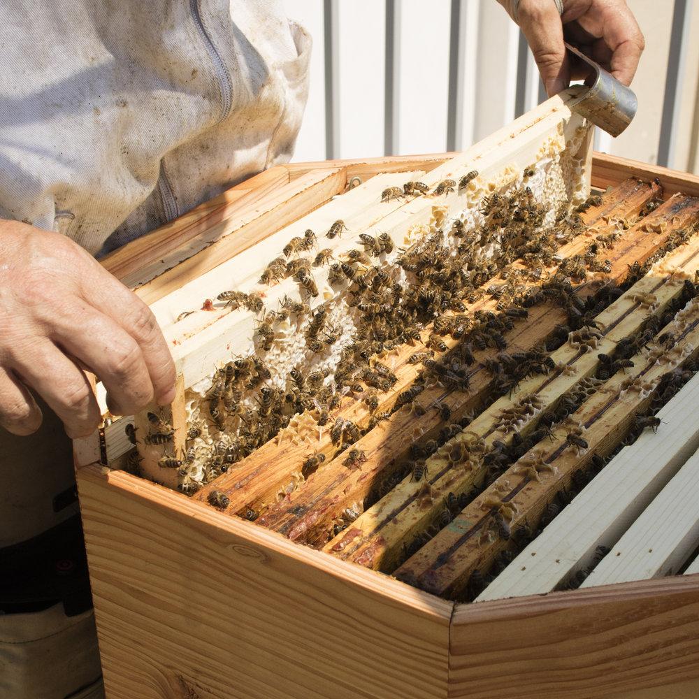 abeille2.jpg