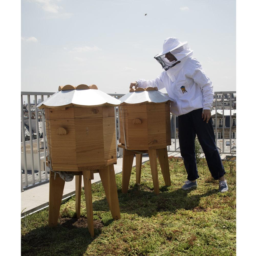 abeille5.jpg