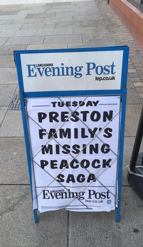 missing peacock.jpg