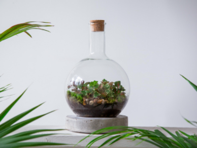 Creating gardens of Eden - London Terrariums featured on NHP