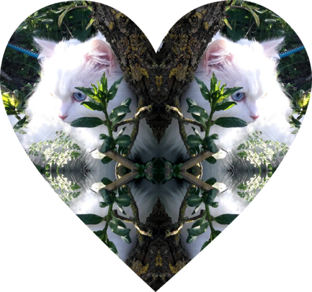kitty heart.png