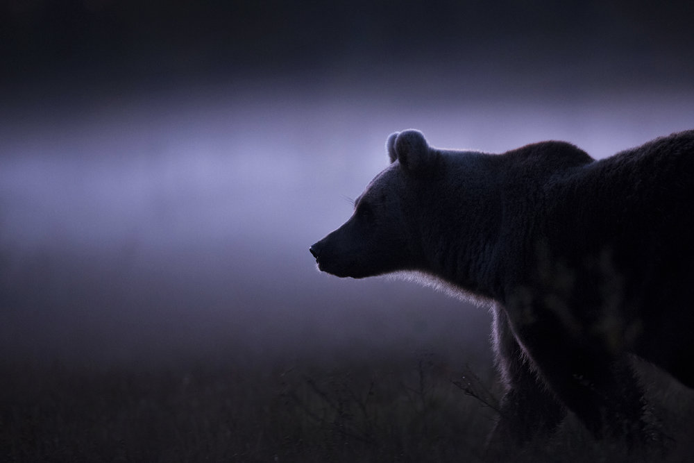 rsGhost_Bear_0T2A2427.jpg
