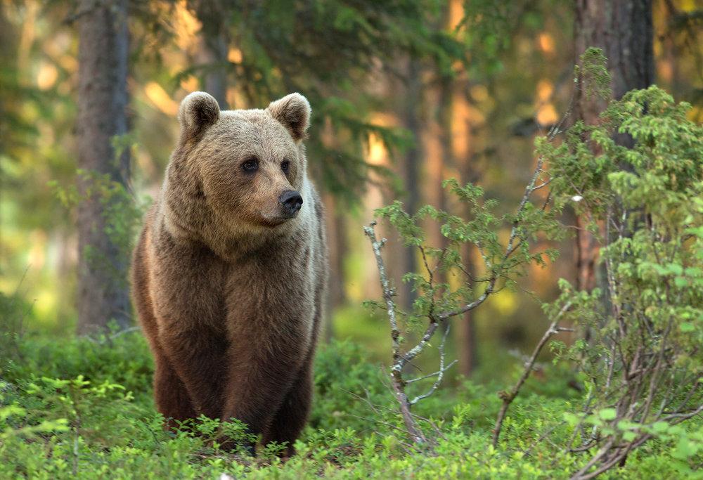 rsOSunset_Bear_Final_0T2A9856.jpg