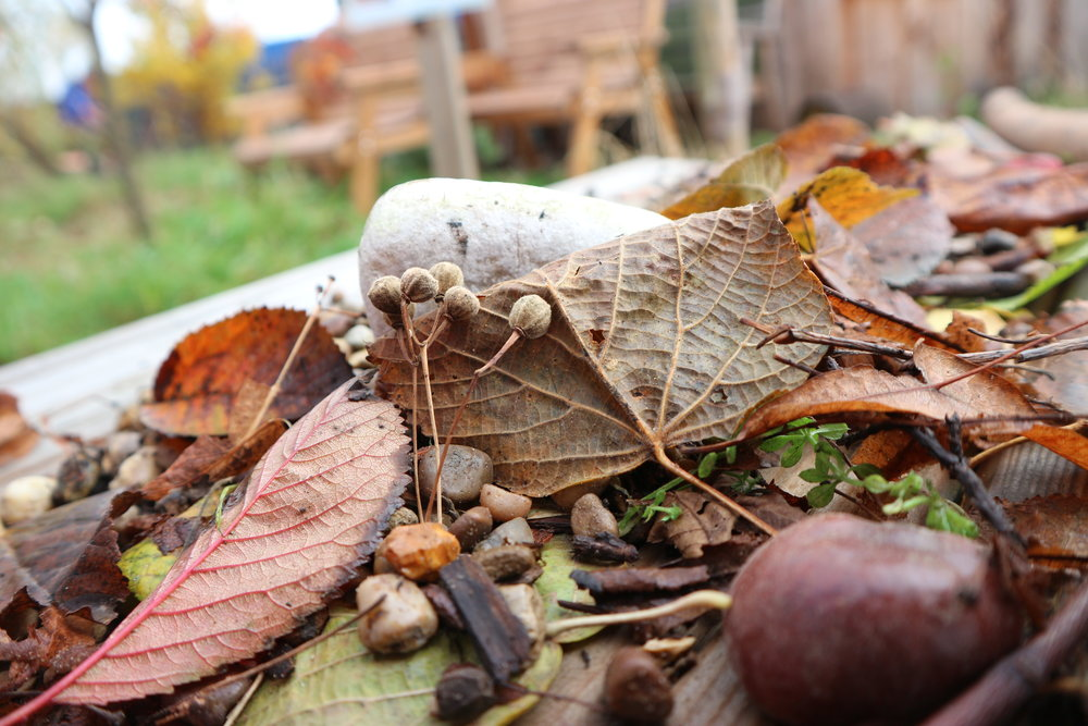 Natural inspiration - What we found…. so many treasures!