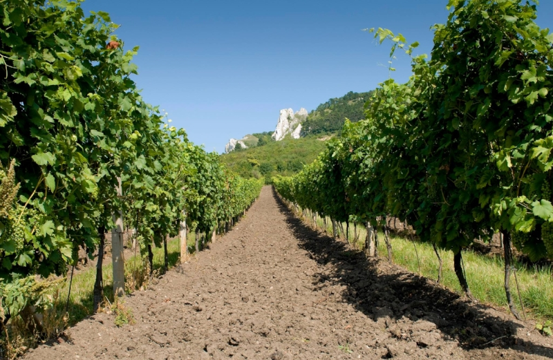 vineyards.jpg