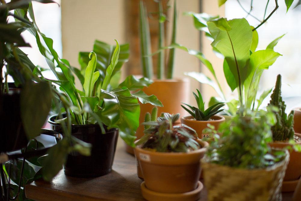 Oferecemos predominantemente opções de plantas amigáveis a ambientes de pouca ou nenhuma incidência de luz solar direta.