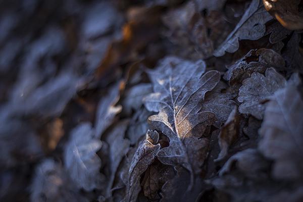 JL_photographyToaster_Kate_WeddingDec_20140007.jpg