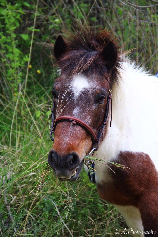 campinglechamadou-sudardeche-4etoiles-miniferme-poney.jpg