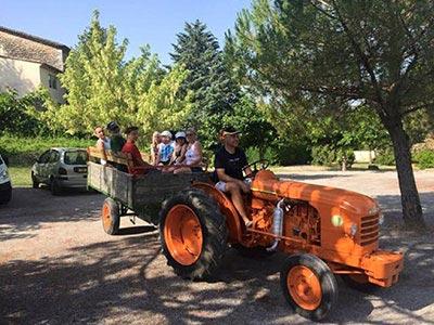 CampingLeChamadou-4étoiles-SudArdèche-Balazuc-Ruoms-Vignes-Vignobles-Nature-Tracteur-MiniFerme-Anes