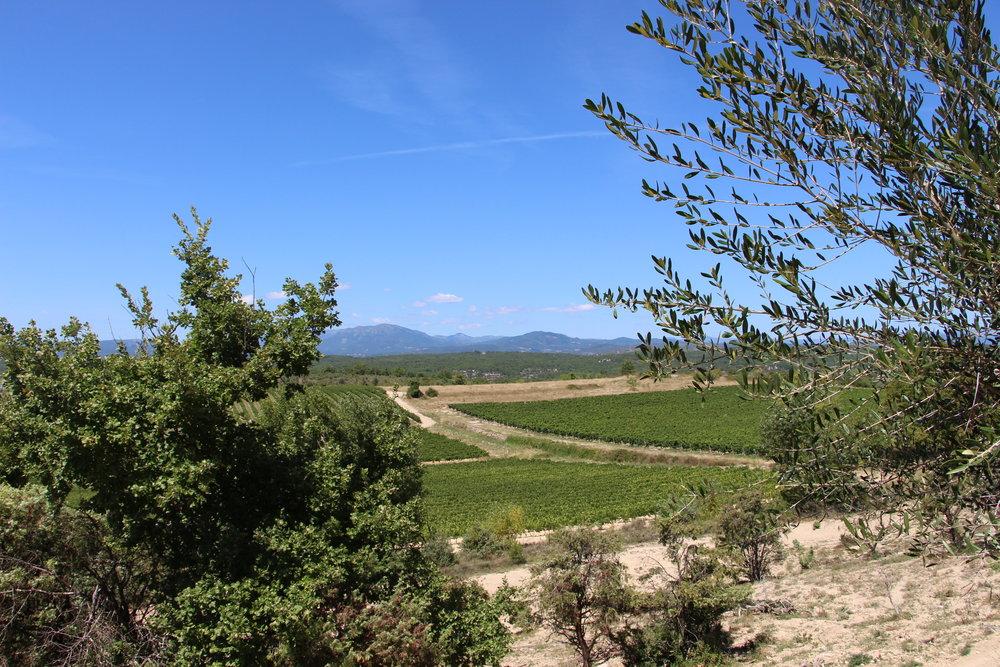 CampingLeChamadou-4étoiles-SudArdèche-Balazuc-Ruoms-Vignes-Vignobles-Nature-MiniFerme