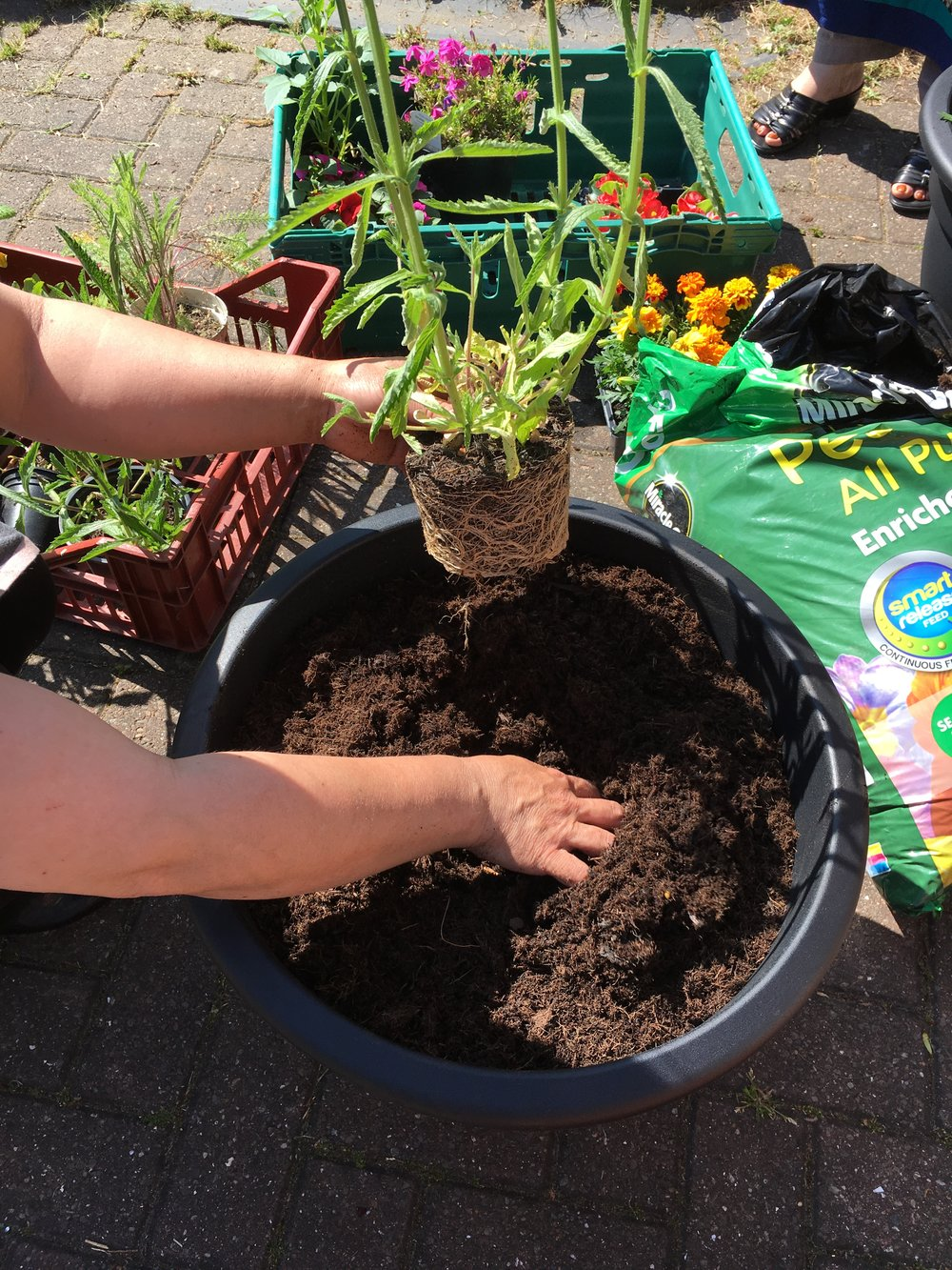Elswick Garden Neighbours - Potting.jpg