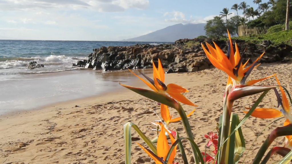 Maui Hawaii Grand Wailea Destination Wedding Pic 19
