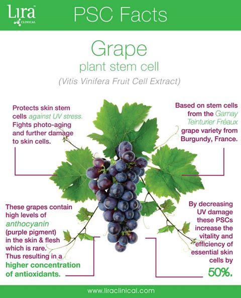 Grape Stem Cells.jpg