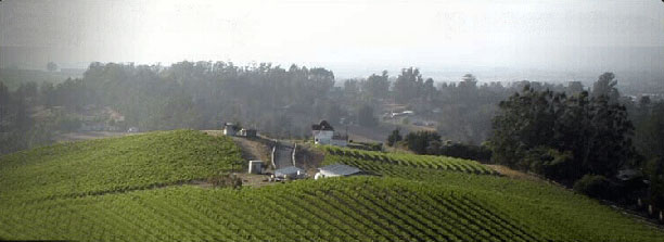 karah-estate-vineyards.jpg