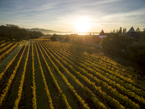 Coppola Winery horizon copy.jpg
