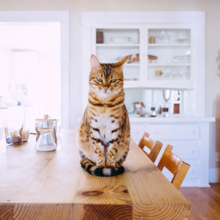 Picky Cat    Cats are texture-based eaters, meaning that they do not use smell or taste as the primary method to decide if they are going to like something. Soulistic offers three distinct food textures to ensure that your cat will love one of them!