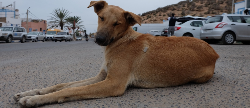 sterilize-calcium-chloride-street-dogs