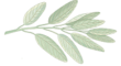 Sage-Logo No text.png