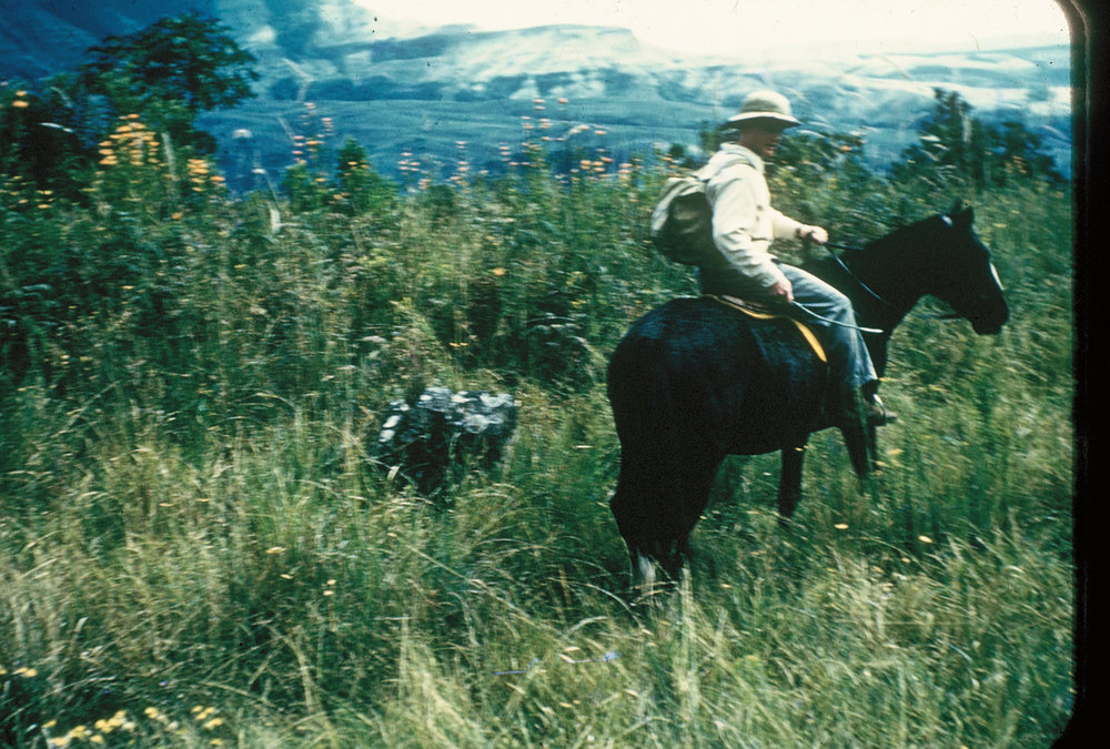 My brother Pehr was an expert horseman. He loved to ride this horse, called Ringals, through the mountains at the Berg. He hired the horse from the local Champagne Castle Hostel.
