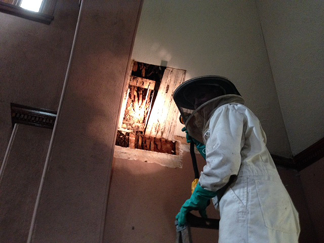 Jon Nelson, a Woonsocket-based bee expert and owner of B. B. Nelson Apiaries suits up for the job.