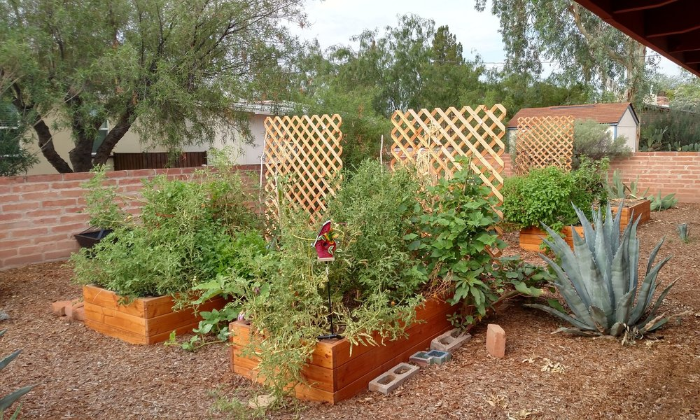 Victory Gardens - For over four years we've helped gardeners all over Southern Arizona start and grow bountiful backyard gardens organically and sustainably.