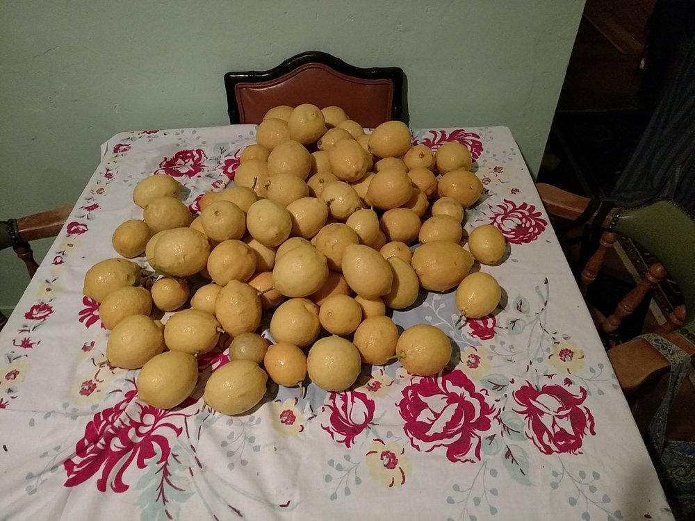 The only problem with organic fertilizers is figuring out what to do with all of these lemons!