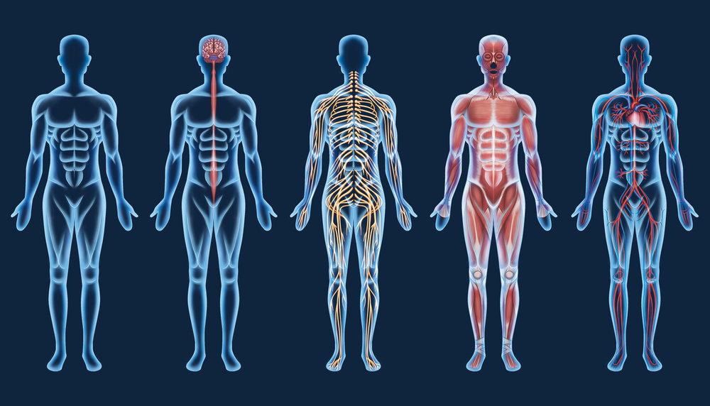 Organ Systems.jpg