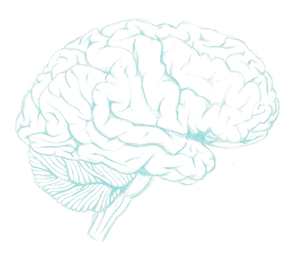 Lateral Brain - Draft 1.png
