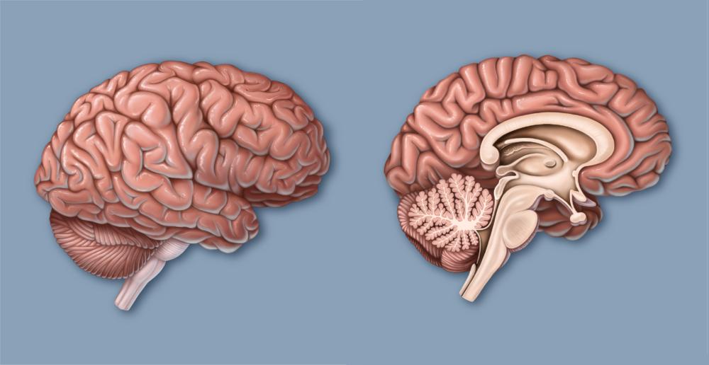 Brain-10.png
