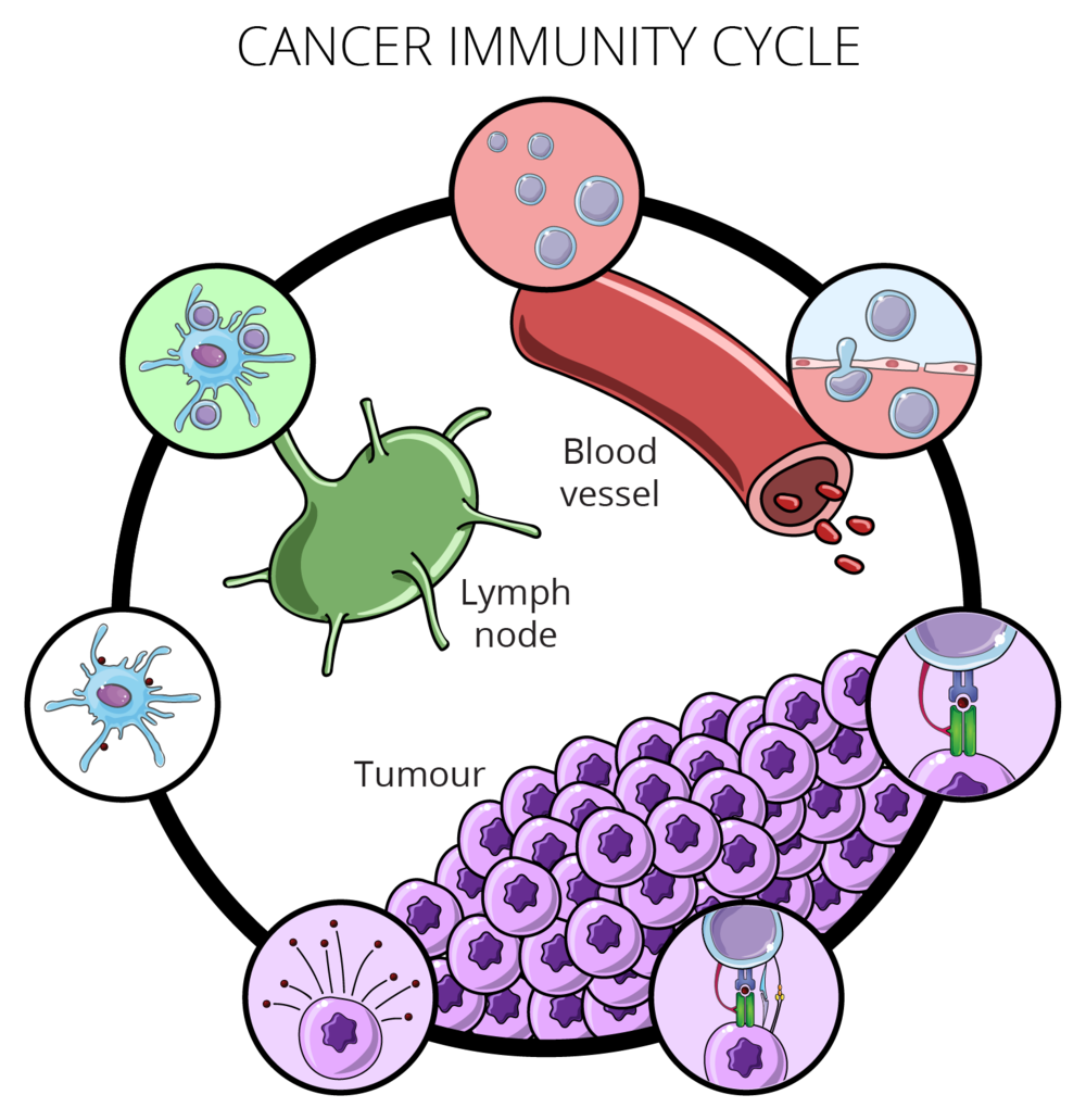 08.29_MICR 270_Cancer Immunity Cycle.png