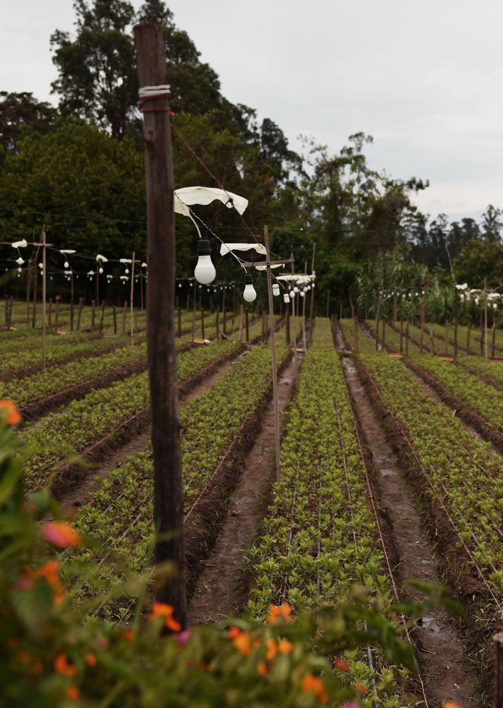 Una Finca en Tababela//A Farm in Tababela