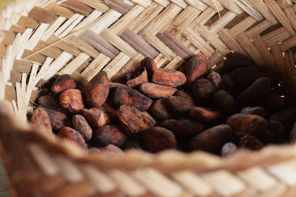 Cacao, Mindo, Ecuador