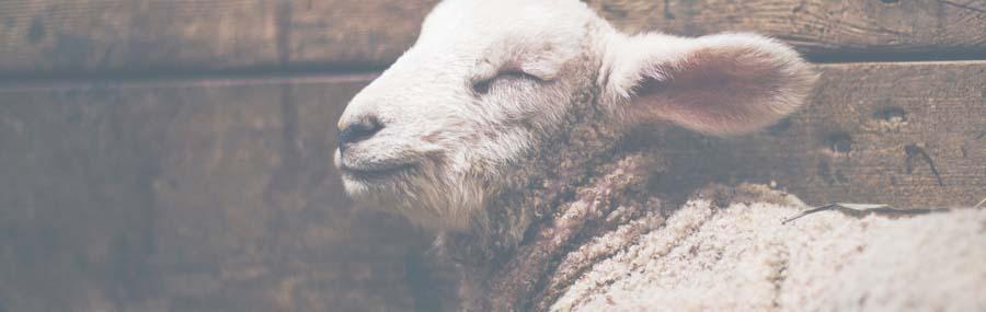 FBC-Worthy-Lamb.jpg