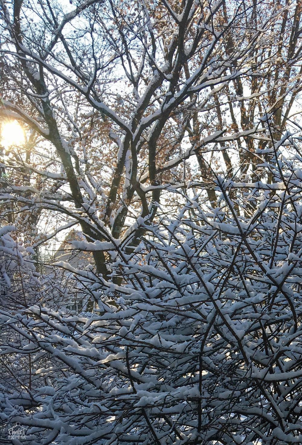 snowy burning bush wm.jpg