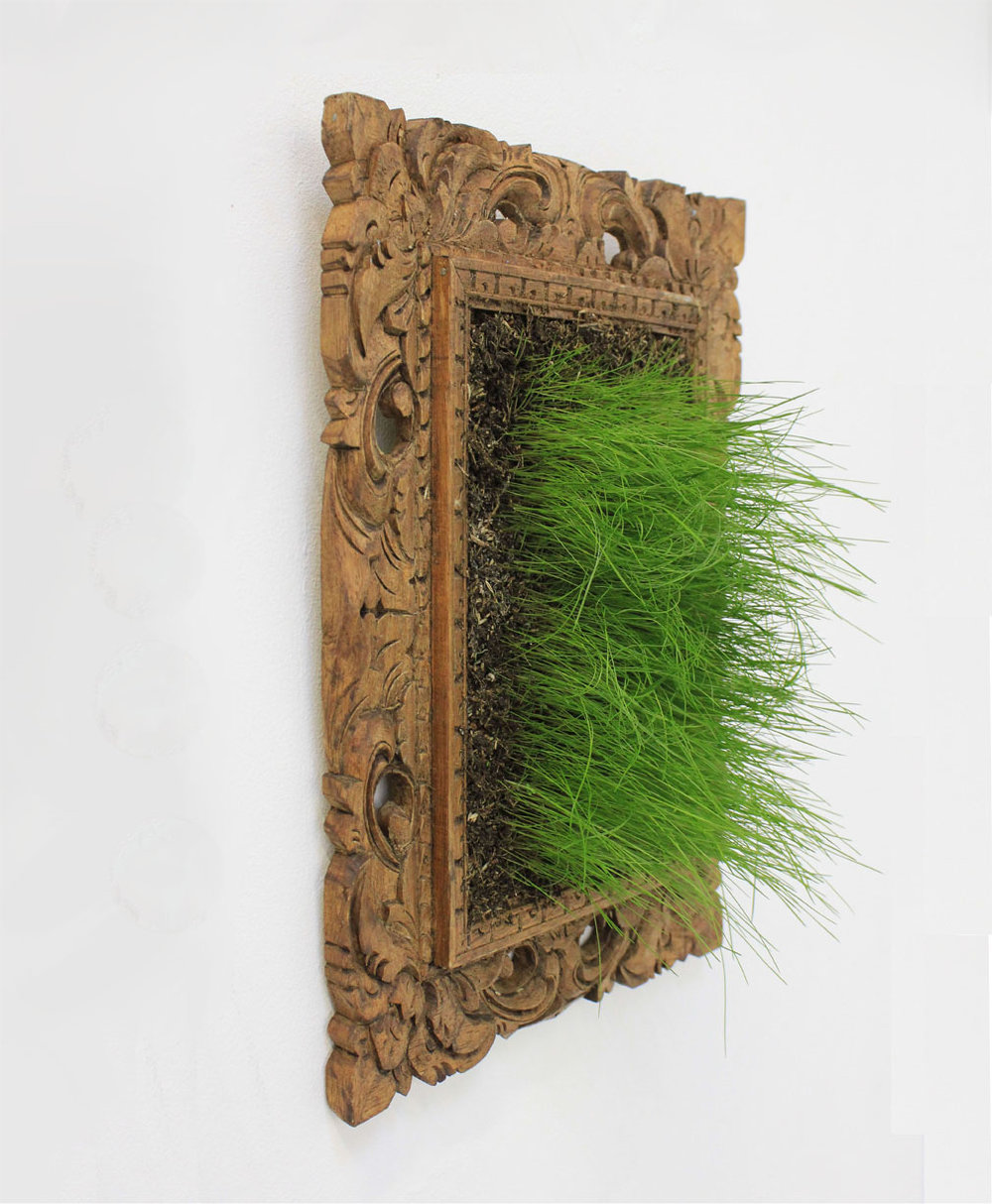 Grass in Frame Laura Phelps Rogers 72dpi.jpg