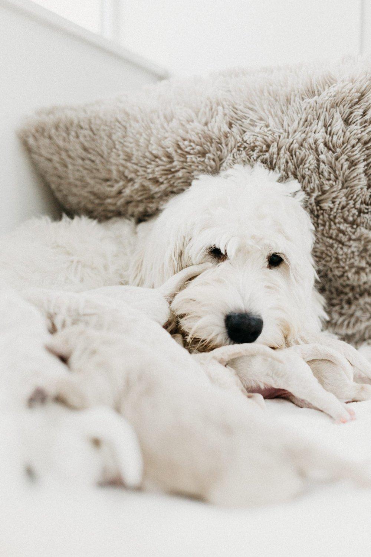 Puppies-Week-One-123.jpg