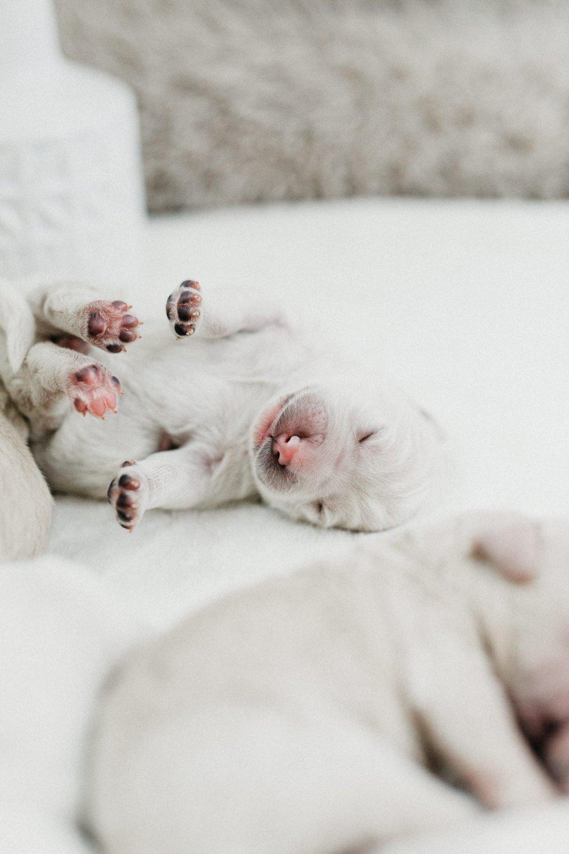 Puppies-Week-One-62.jpg