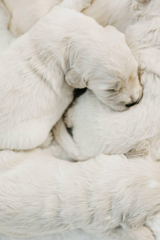 Puppies-Week-2-42.jpg