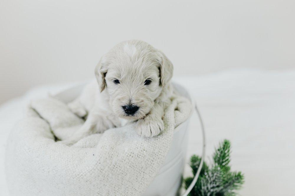 Puppies-Week-3-2.jpg