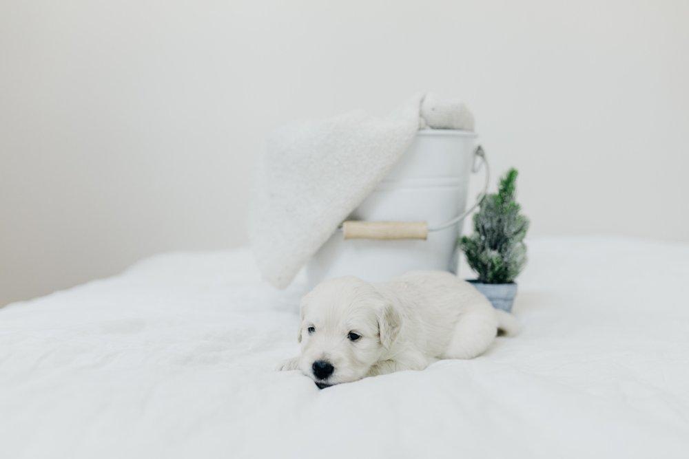 Puppies-Week-3-9.jpg