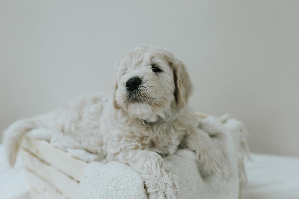 Puppies-Week-6-133.jpg