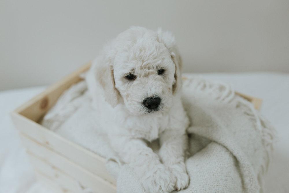 Puppies-Week-6-86.jpg