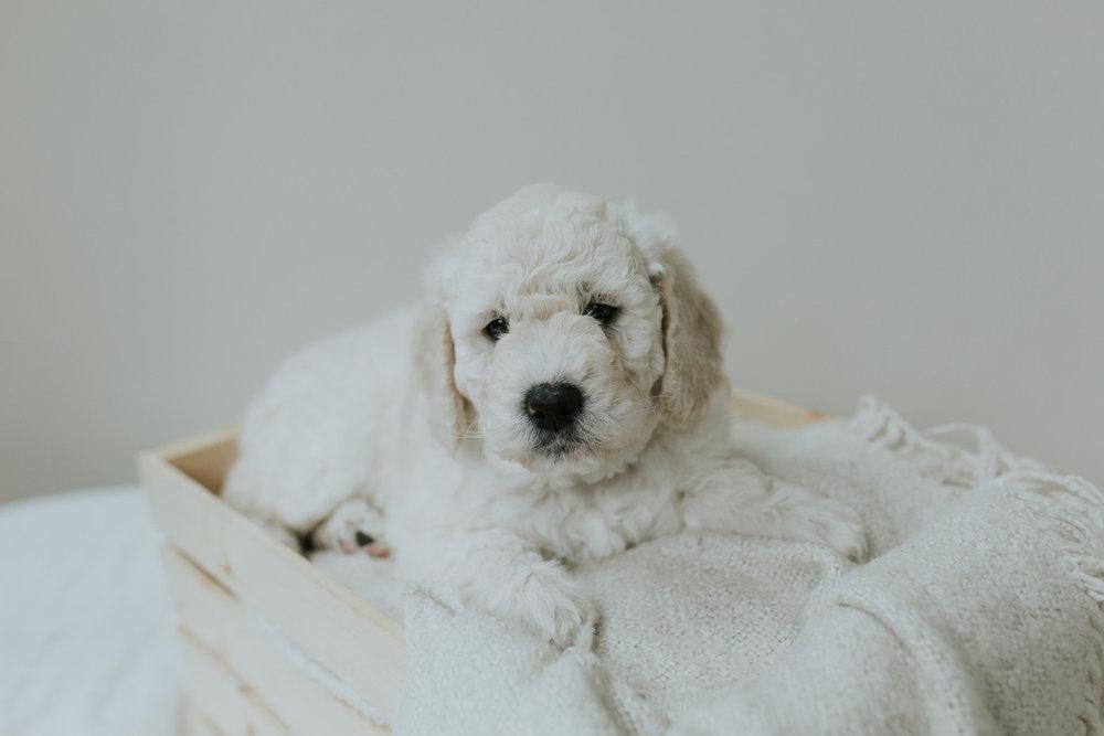Puppies-Week-6-98.jpg