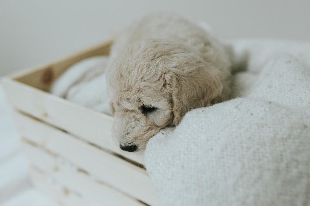 Puppies-Week-6-116.jpg