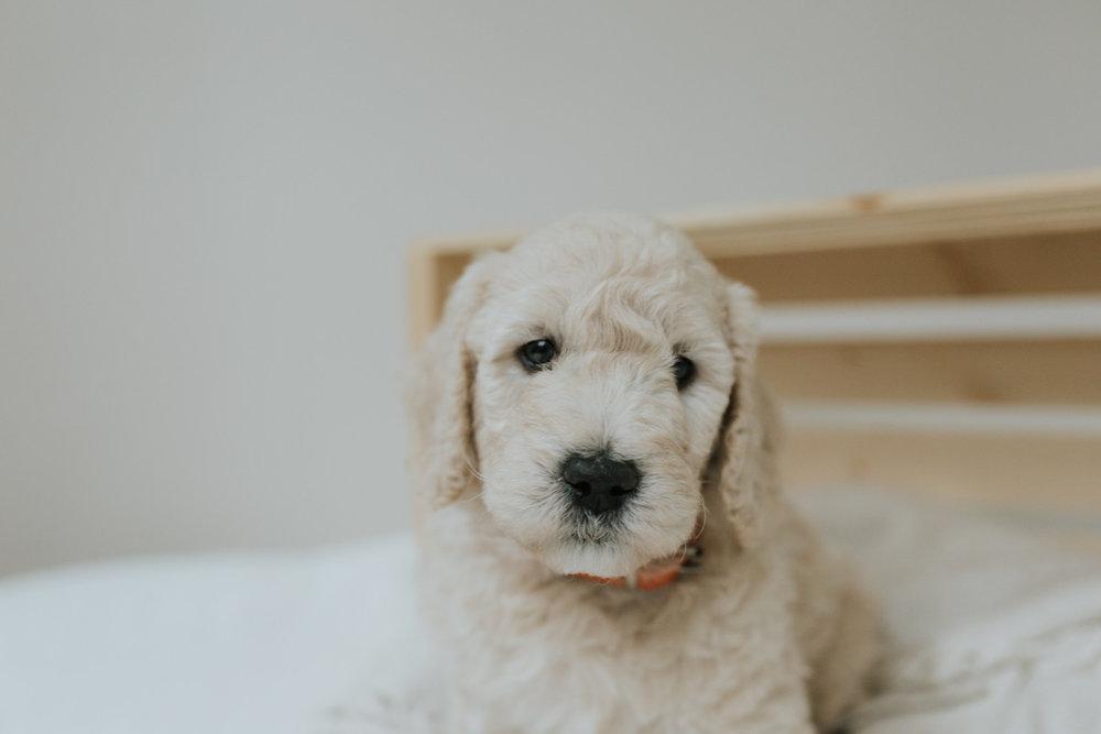 Puppies-Week-6-113.jpg