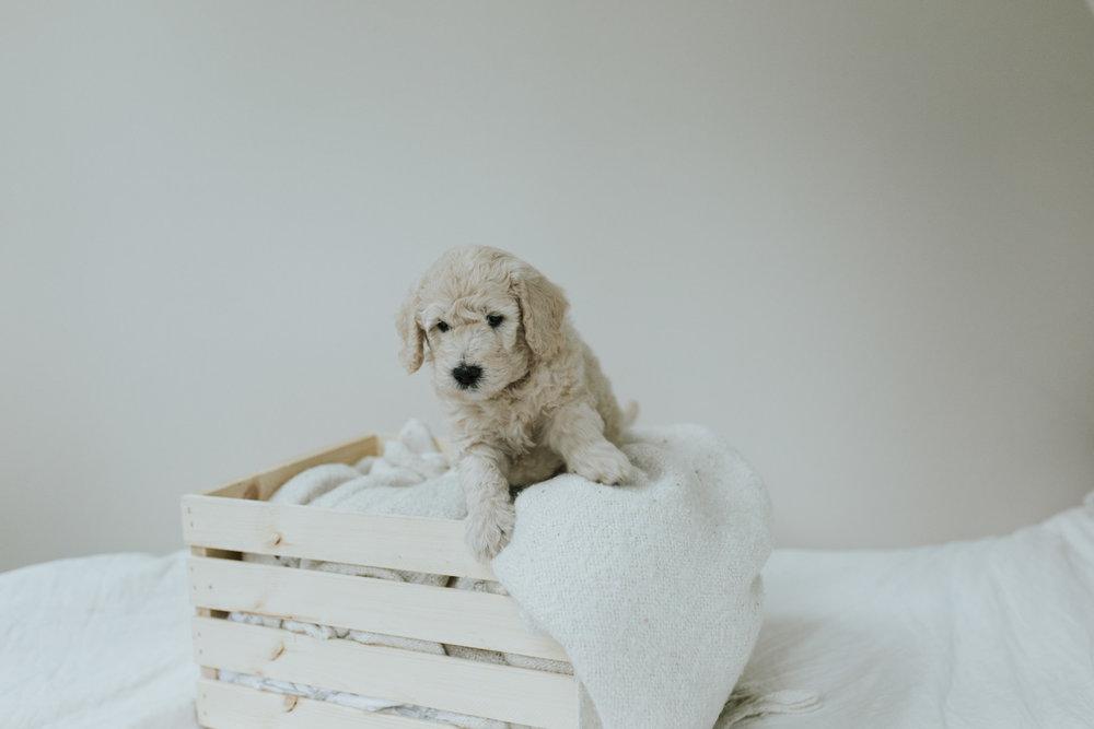 Puppies-Week-6-117.jpg